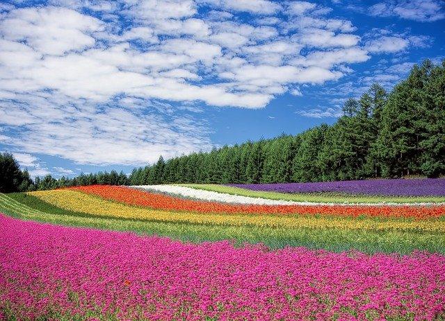 flower-field-250016_640