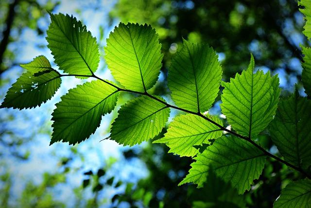 leaf-4339680_640
