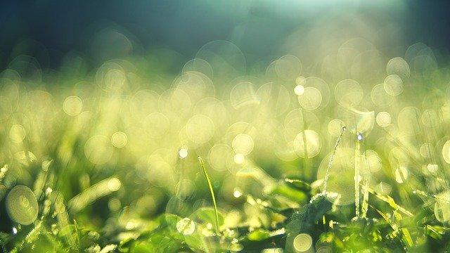 牧草地の露