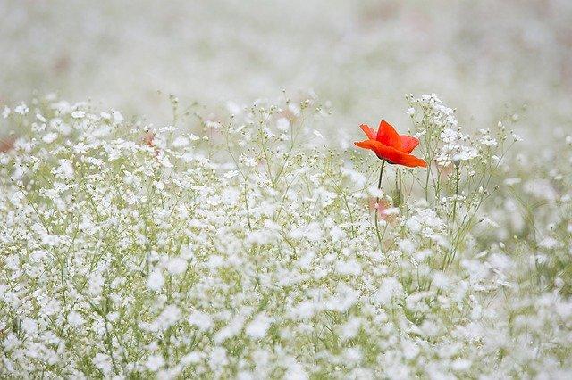 白い花の中に赤い花