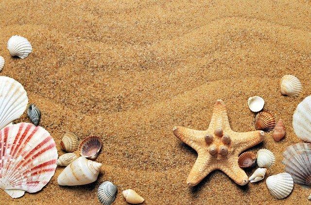 ビーチの貝殻