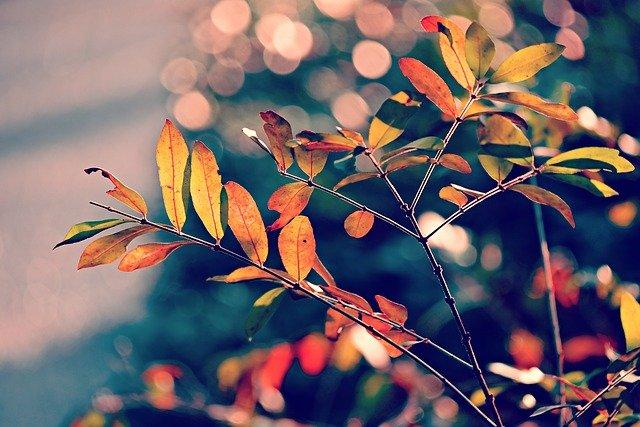 autumn-leaf-3881675_640