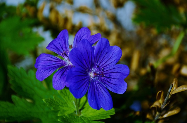 blue-187763_640