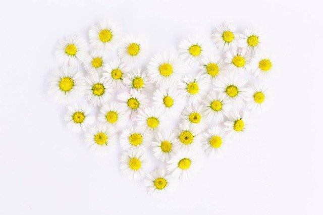 daisies-1535532_640