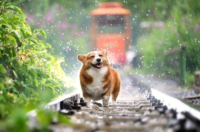 dog-4415649_640