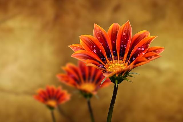 flower-gerbel-3852488_640