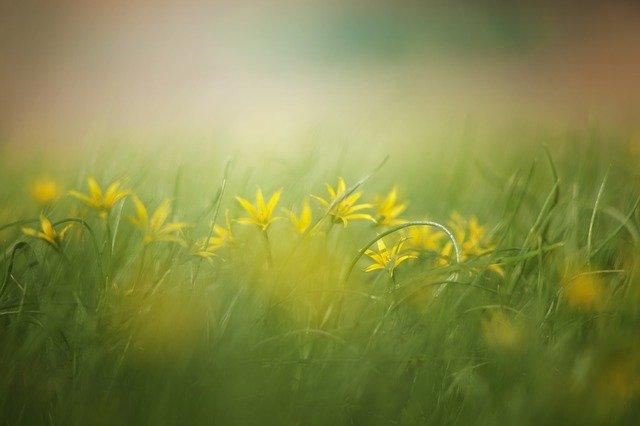 grass-3089791_640
