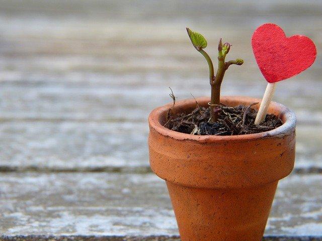 flowerpot-2756428_640