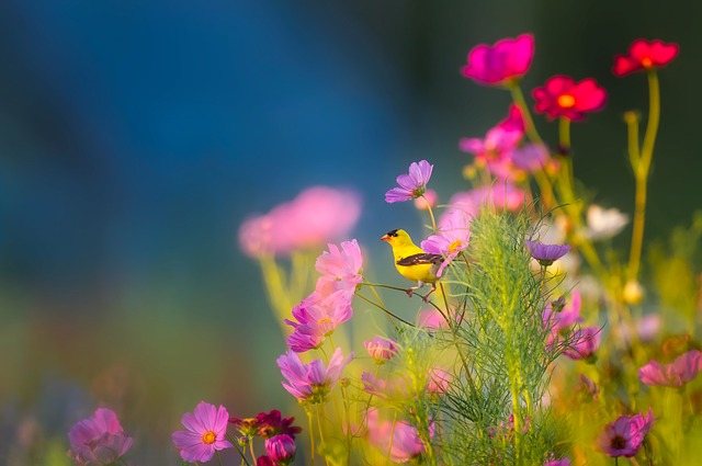 flowers-1835619_640