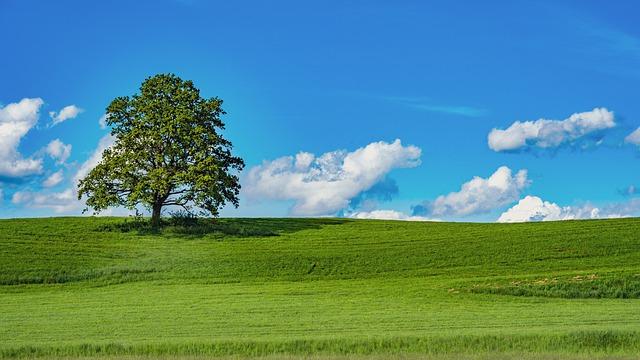 tree-6277332_640