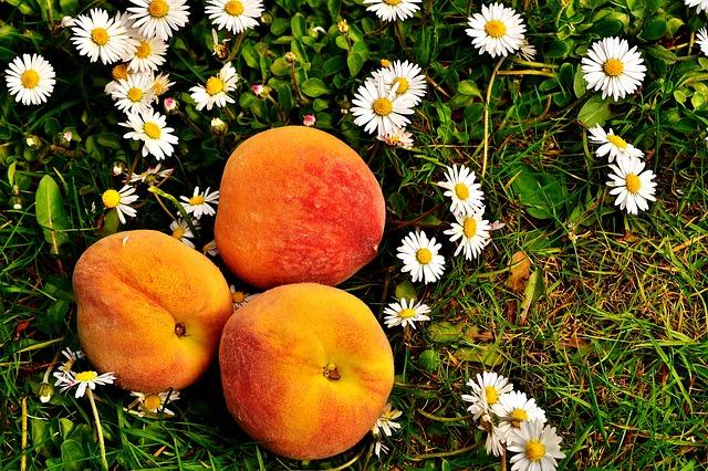 peaches-2290611_640