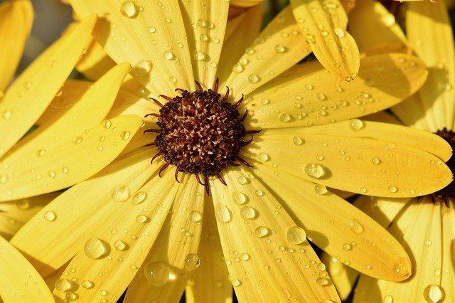 flower-4217683_640