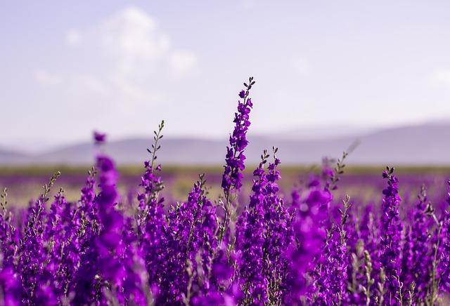 flowers-5383054_640