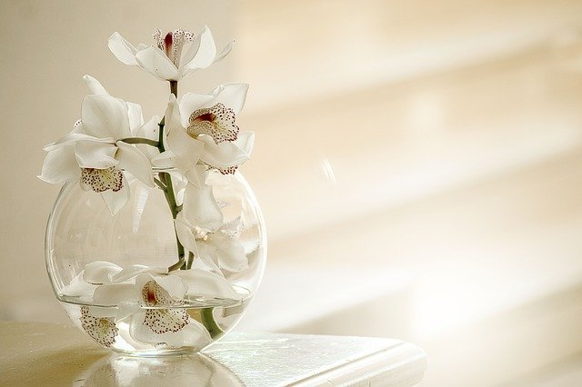 orchid-3178759_640