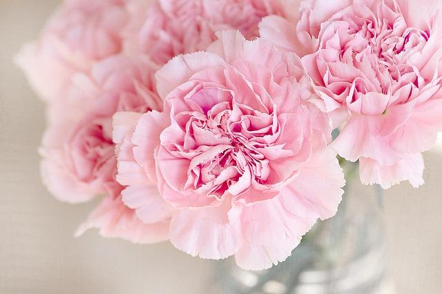 carnation-1325012_640