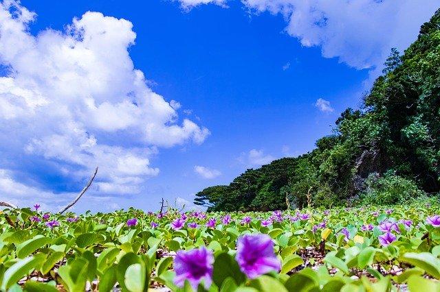 ishigaki-3420678_640