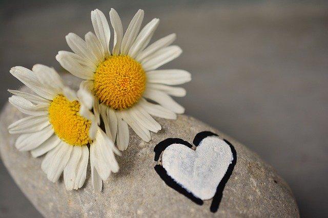 daisies-2357264_640