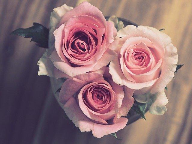 rose-3072698_640
