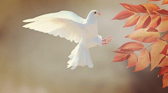 dove-2516641_640 (1)